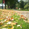 Fall photo 1.1